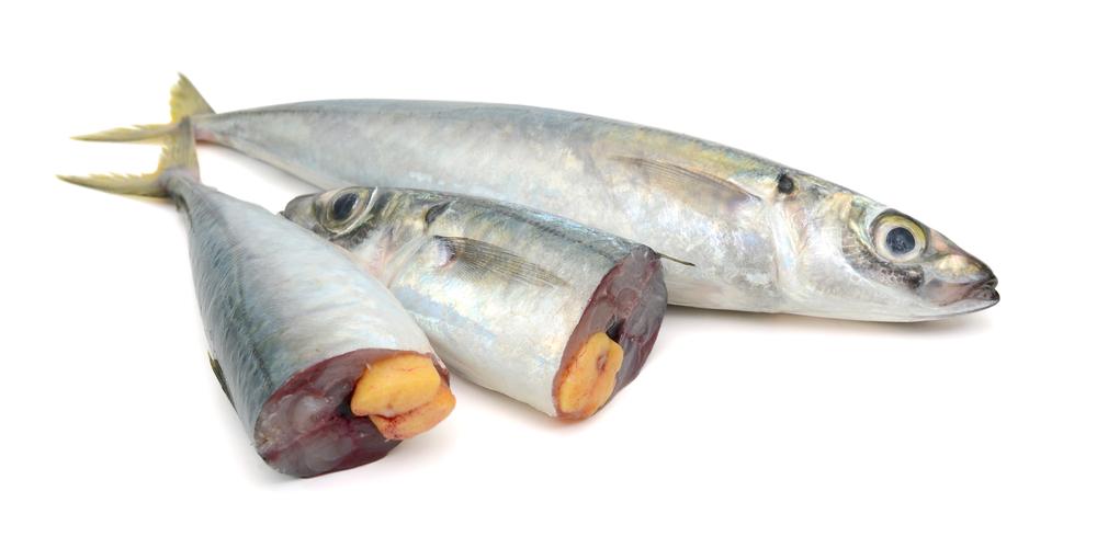 Mengenal Cacing Anisakis yang Terdapat pada Kaleng Sarden Ikan Makarel