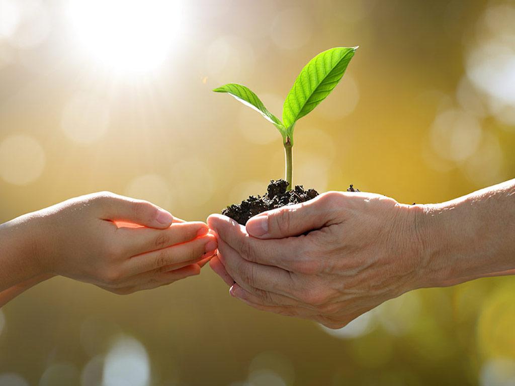 Manfaat Menanam Pohon untuk Kesehatan dan Kesejahteraan Mental