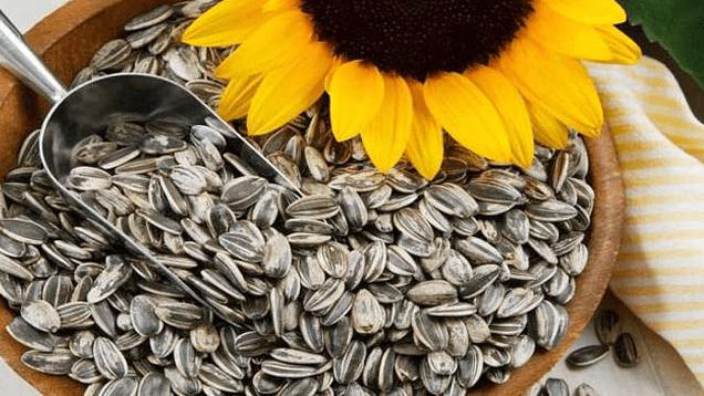 Manfaat Makan Kuaci Bunga Matahari Untuk Kesehatan