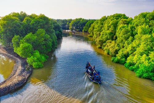 Pohon Bakau dan Manfaatnya Bagi Lingkungan   WeCare.id