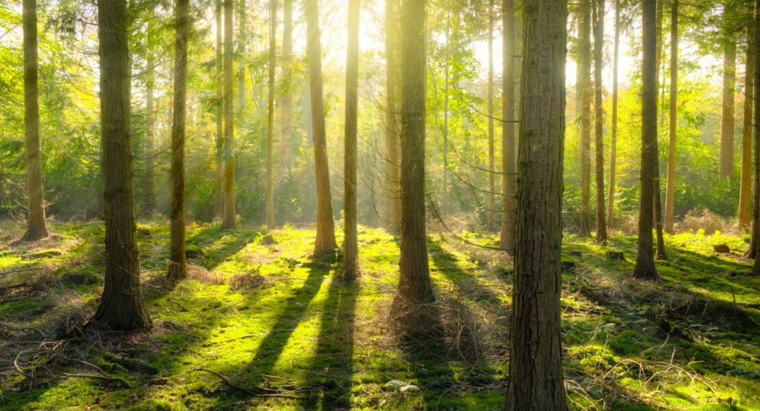 Pentingnya Hutan Bagi Lingkungan Hidup | WeCare.id