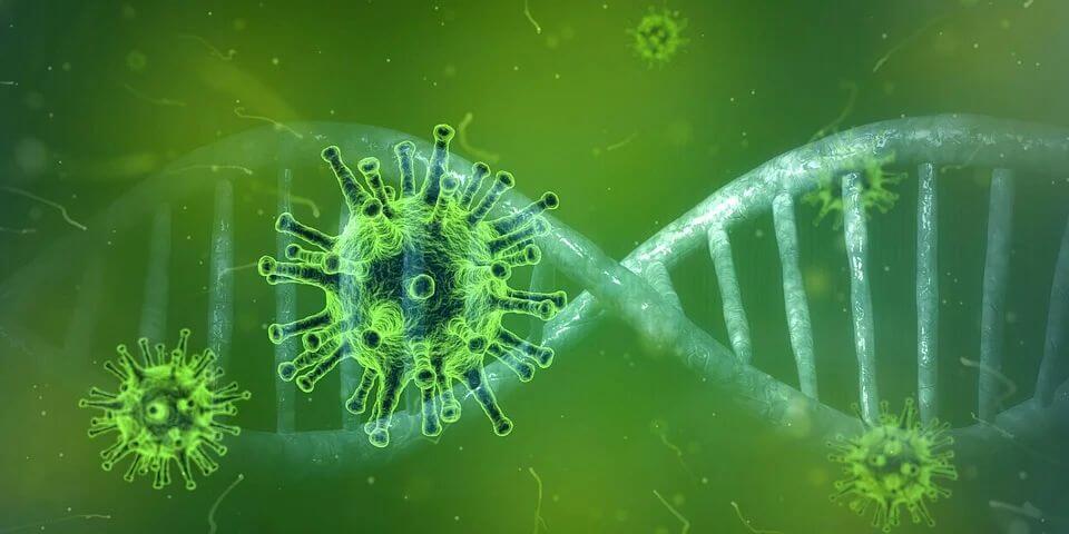 Apakah Virus Nipah Akan Jadi the Next Pandemic?   WeCare.id